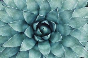 C'est quoi la Naturopathie ?