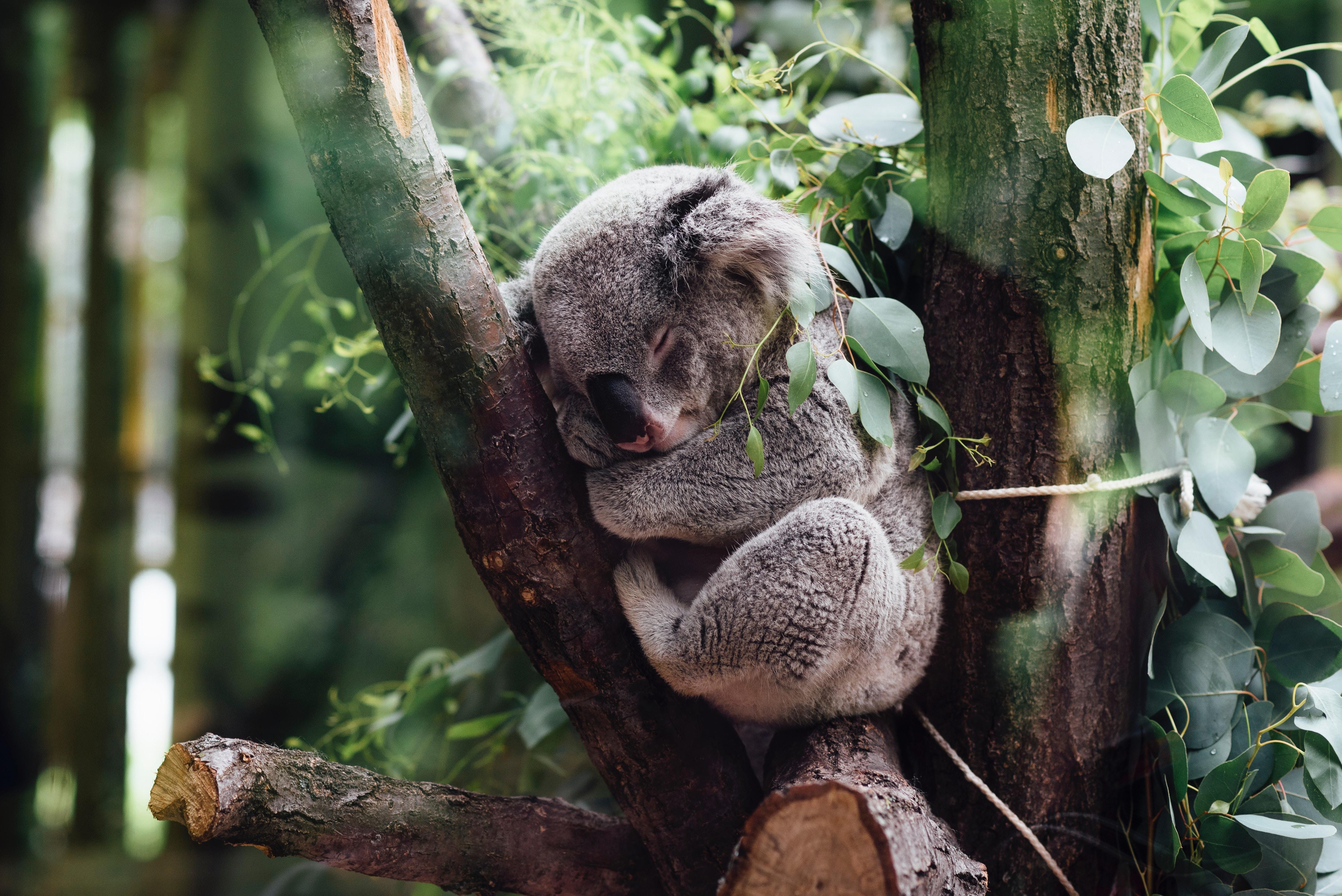 «Dormir c'est guérir !» – 20 conseils au naturel pour un bon sommeil