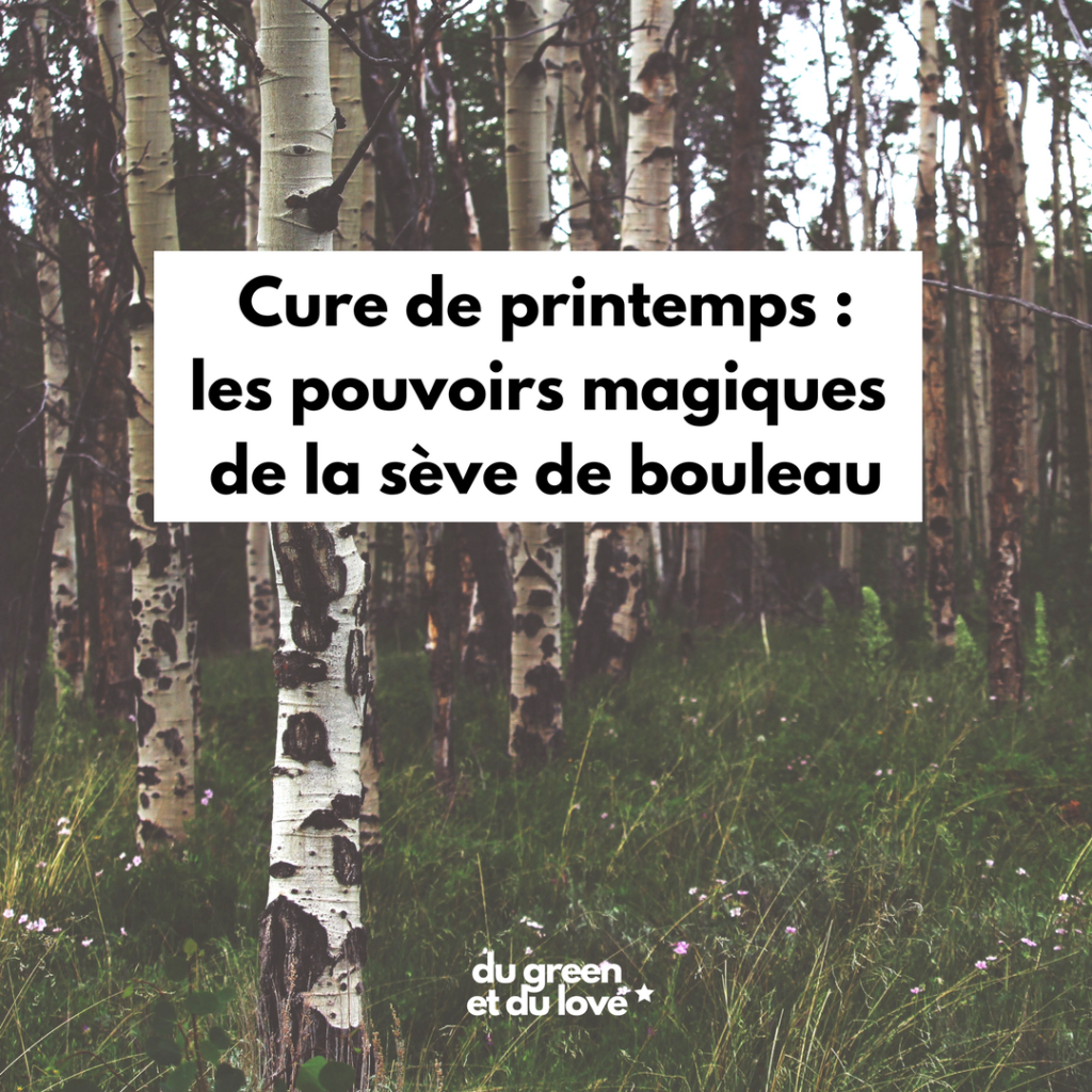 dugreenetdulove-article-detox-printemps-seve-bouleau