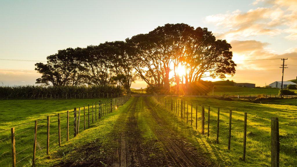 du-green-et-du-love-dugreenetdulove-agriculture-biologique-biodynamique-demeter-hauschka-campagne-cosmetique-naturel